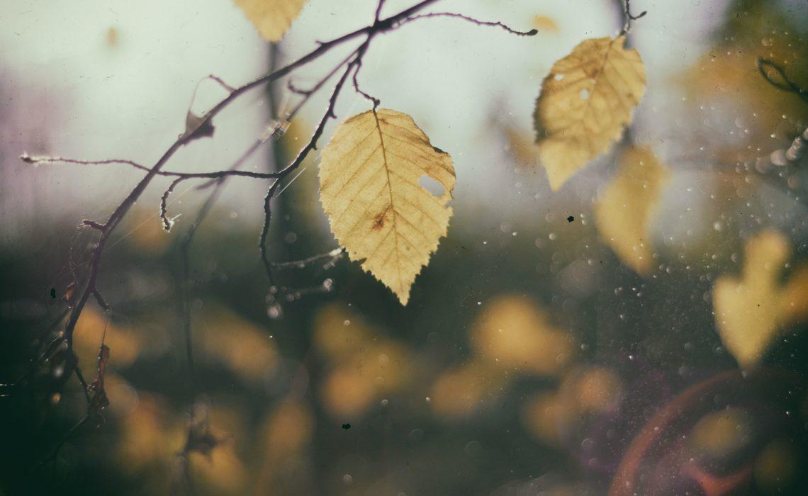 listopad jesien